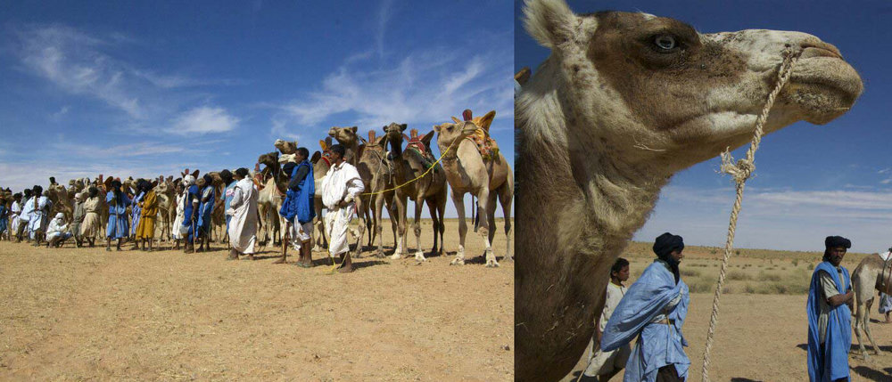 2009 - Dès sa première édition, la joie de vivre constitue le cœur et l'esprit du Festival nomade. Ensemble, nous trouvons la force de réunir nos esprits.En Mauritanie, c'est un rassemblement nomade exceptionnel qui voit le jour. Des nomades affluent des quatre coins du pays pour célébrer le dynamisme de leur culture : jeux traditionnels, musiques, compétitions de danses et de percussions... Il y a même une compétition pour choisir choisir la plus belle tente.L'immense artiste mauritanienne Malouma, connue aussi pour ses combats politiques, nous fait l'honneur de chanter sous la tente.Sans oublier une course de chameaux qui rassemble plusieurs centaines de participants ! Inoubliable !Cet événement, dont le rayonnement dépasse toutes les espérances, est organisé en collaboration avec le ministère du Commerce, de l'Artisanat et du Tourisme et le ministère de la Culture, de la Jeunesse et des Sports de Mauritanie, la Mairie de Tingadesh ainsi que les élus et l'ensemble des collectivités de la wilaya de Trarza.Tous les médias mauritaniens et plusieurs médias internationaux parlent de nous : Al Jazeera, Al Arabiya, RFI, TV5, Africa n°1, Radio Mauritanie et la presse locale.