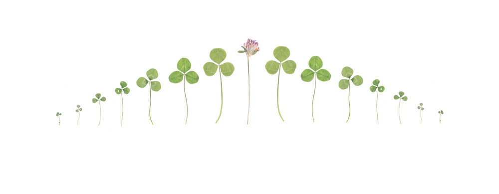6)flat scale of clover.jpg