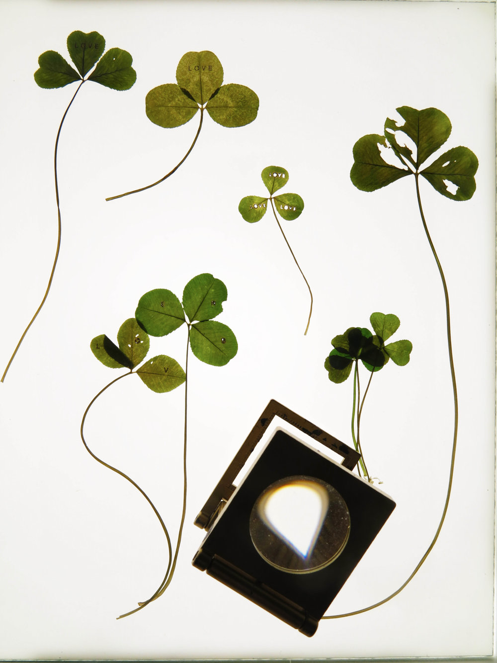 31a) clover light box piece.jpg