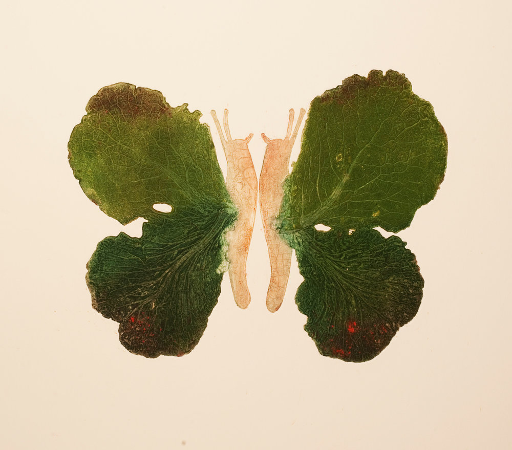 34g)cabbage butterfly.jpg