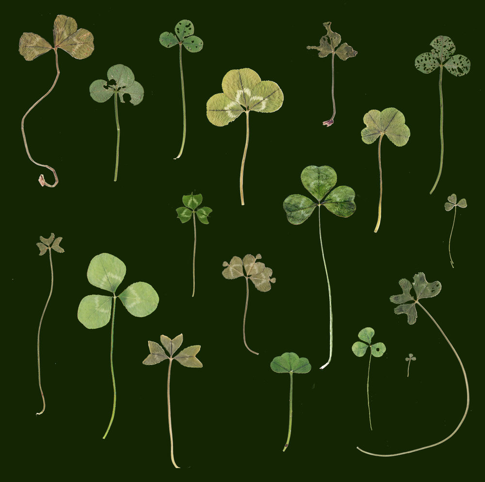 coo-geller-clover-collection-II-card.jpg