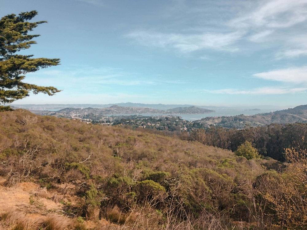 San Francisco Insider Tips Surroundings
