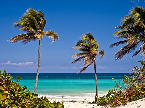 Cuba-Palm-Trees