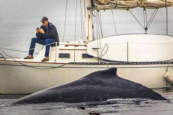 This man isn't present. Even the humpback whale can't get his attention!