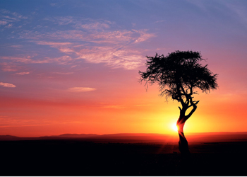 Kenya at sunset