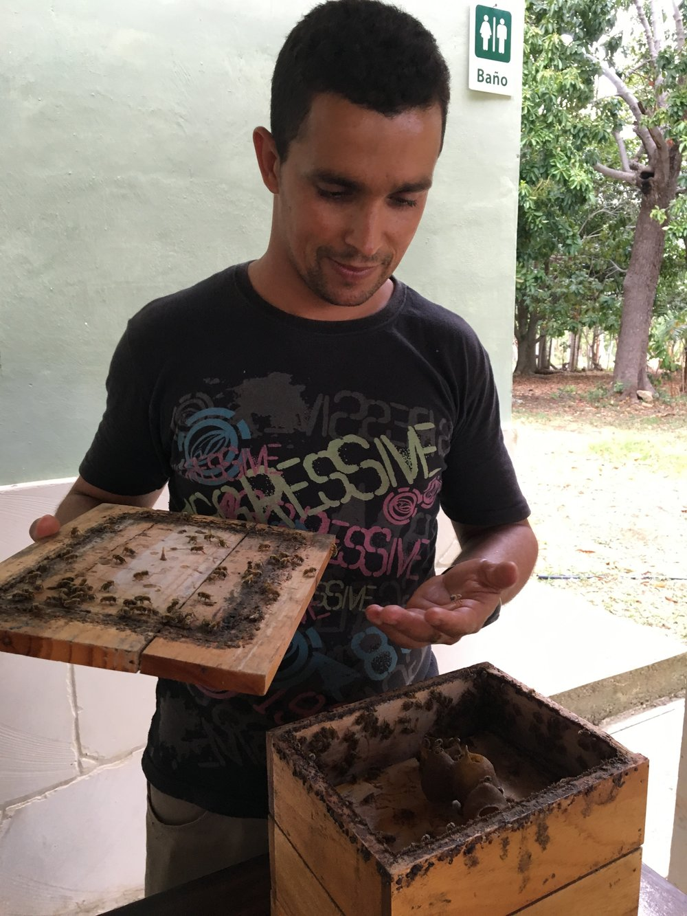 Yes, Mikael's farm even had an apiary---bees!