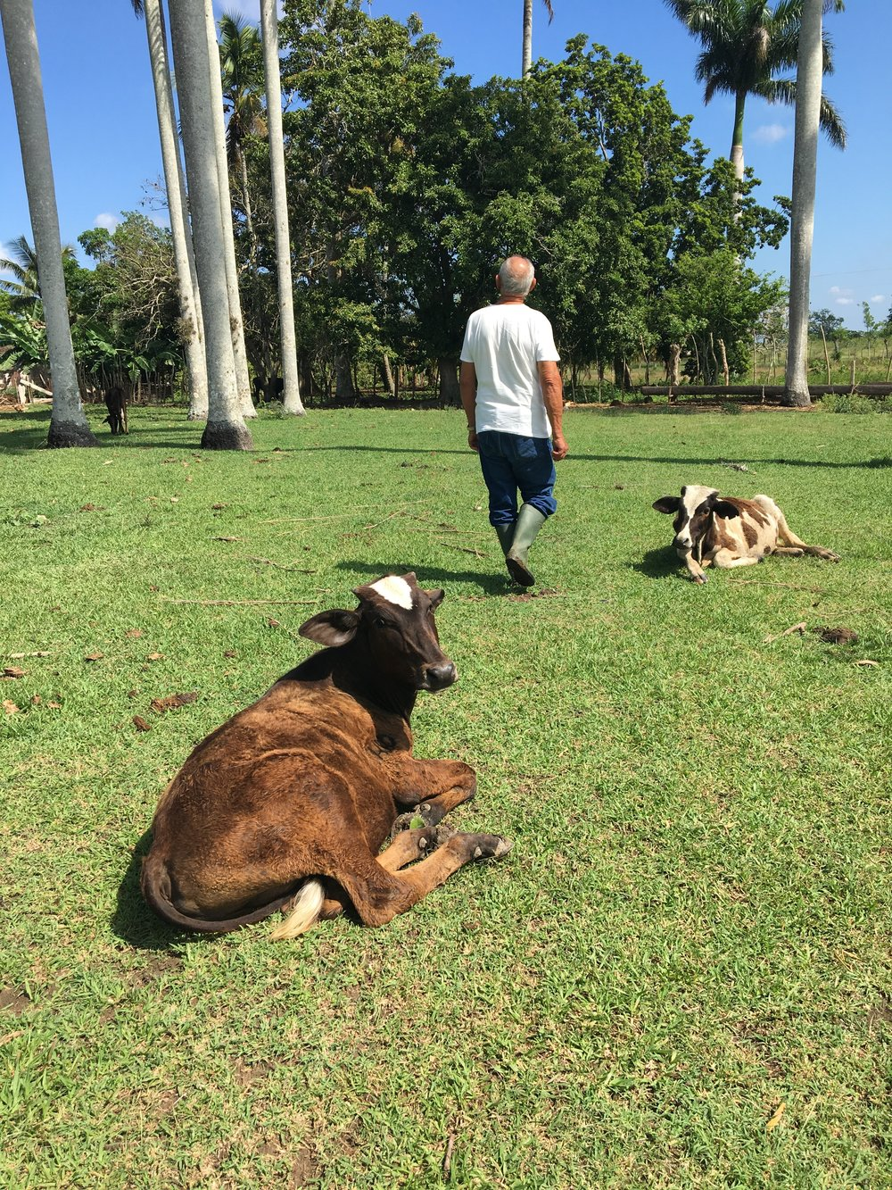 Manolo, showing me around. (And don't the cows look content?!)