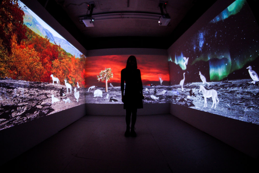 "2017 Boston grantee Allison Maria Rodriguez with her video installation ""Wish You Were Here: Greetings From the Galápagos."""
