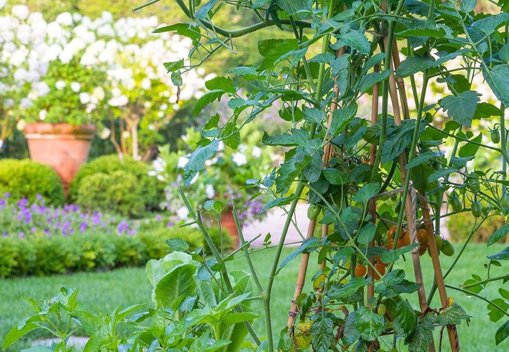 IMG_5493 446 First Neck Garden.jpg