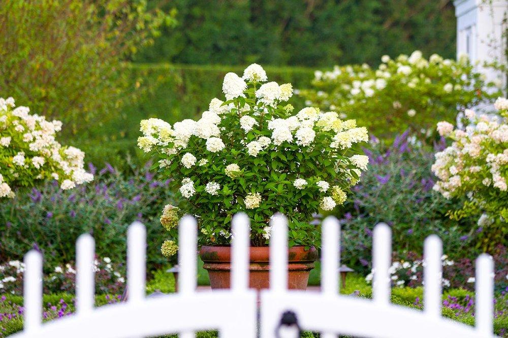 IMG_5284 446 First Neck Garden.jpg