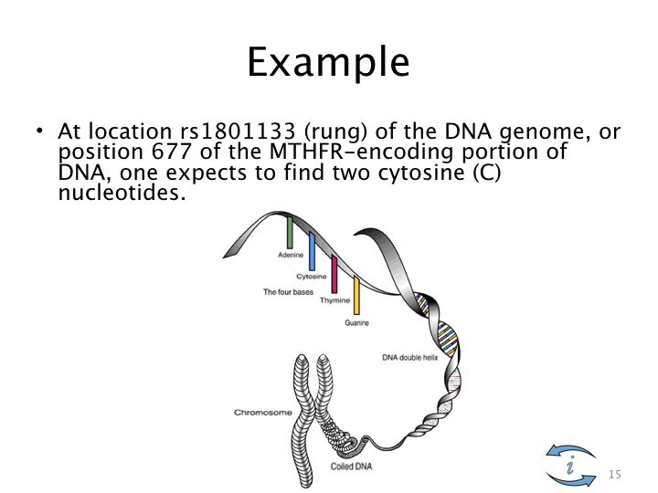 Introduction to Nutrigenomics.015.jpeg