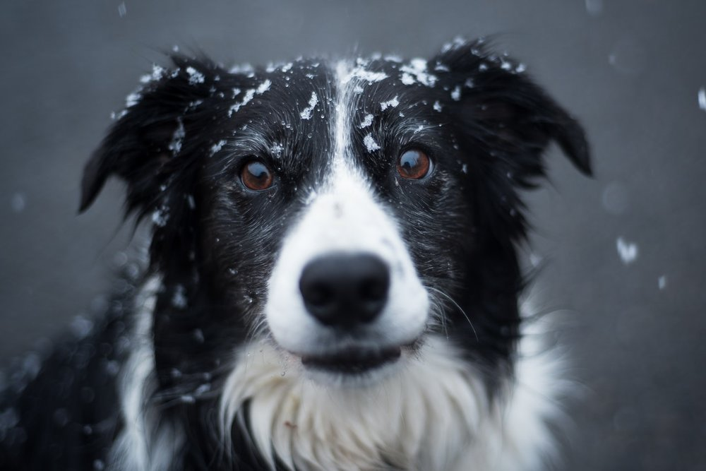 $20 off all winter on Dog DNA testing. Happy Holidays!