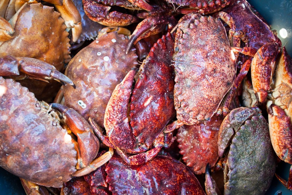Rock Crab come in all sorts of sizes and colors (Red, Brown, and Yellow!)