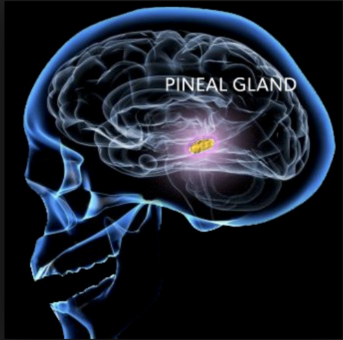 The Pineal Gland — Energy Is Everything