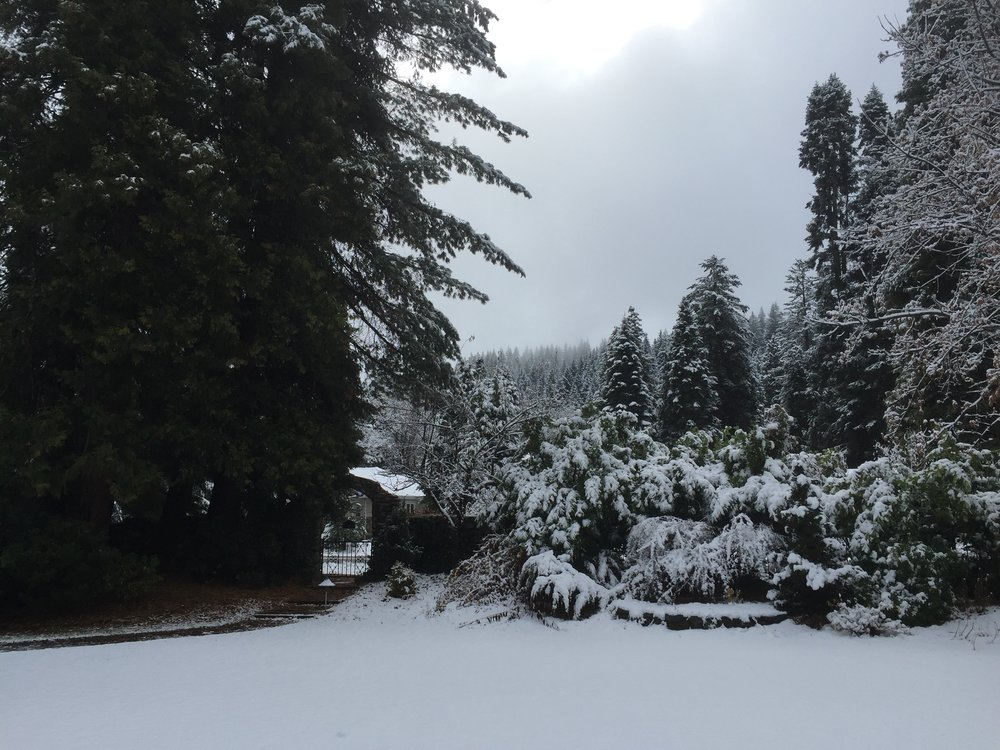Lovely view of the front of the property, seeing the magical mountain side of evergreen trees covered in snow and the calm peace fo the front property grounds and fairy tale fence and arch