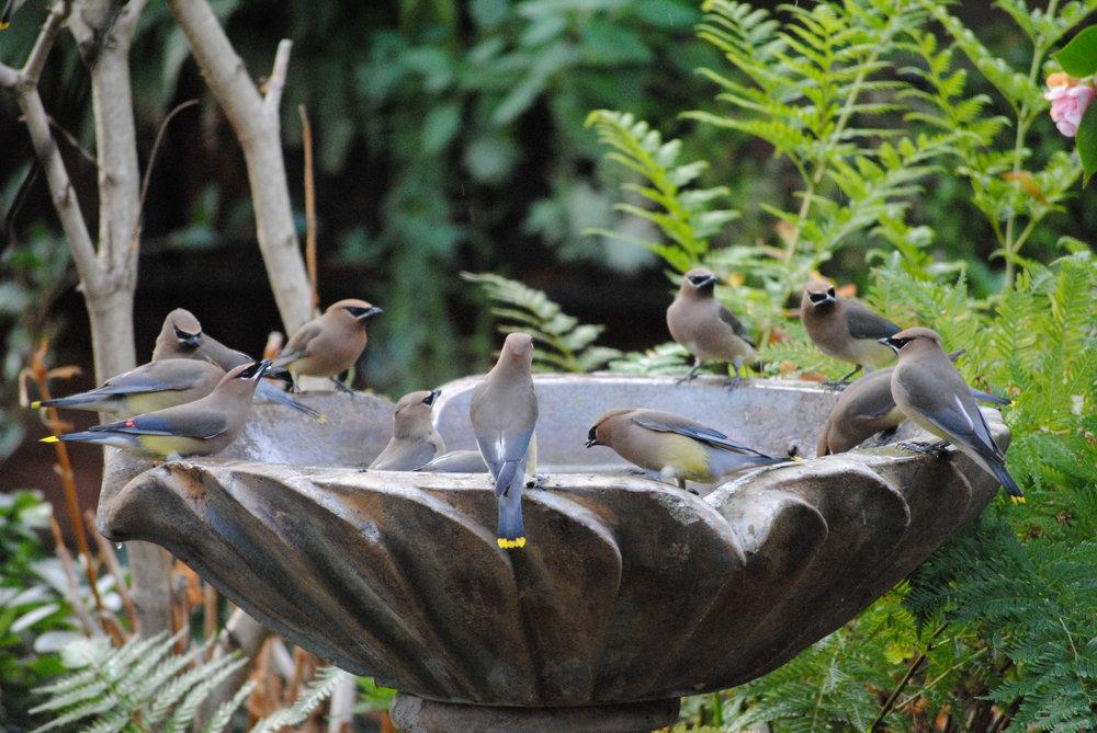 birdbath.JPG