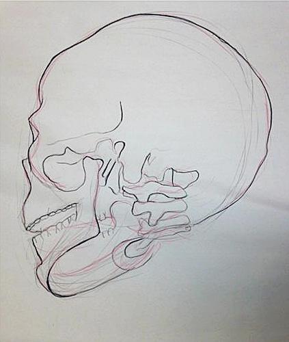 """Skeletal Study   Conte Crayon    24"""" x 18"""""""