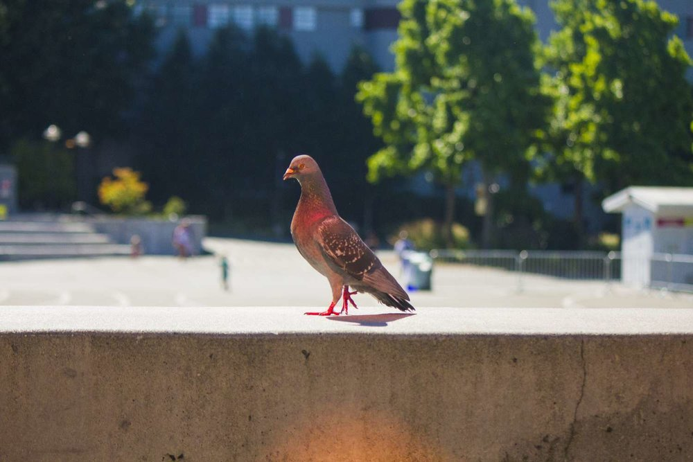 P-Bird.jpg