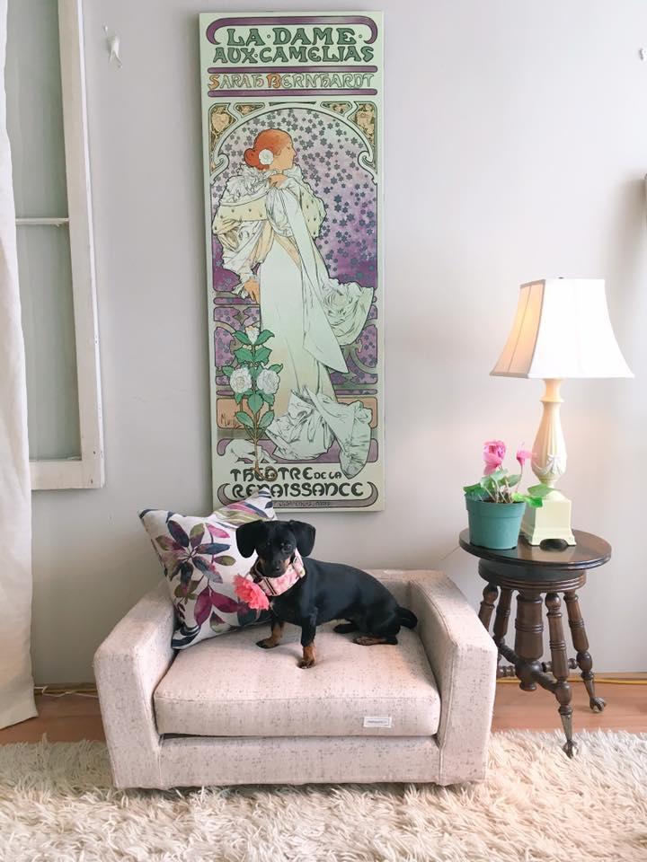 Dog sofas