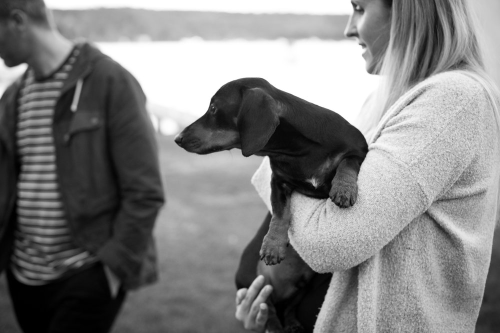Sausage dog love