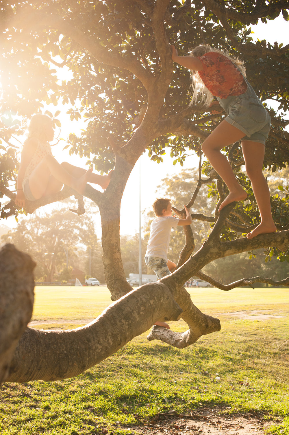 children climbing trees sunset photos avoca beach nsw