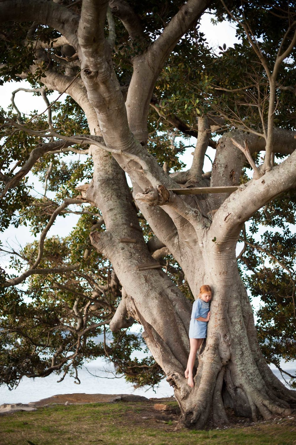Tree climbing Saratoga Waterfront