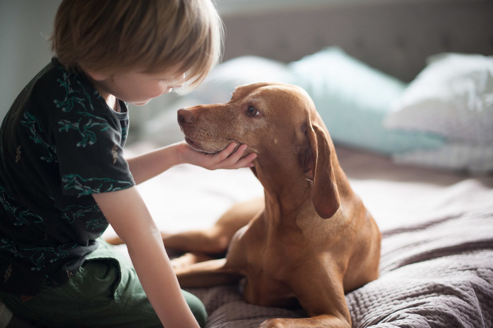 boy and dog pet photography central coast