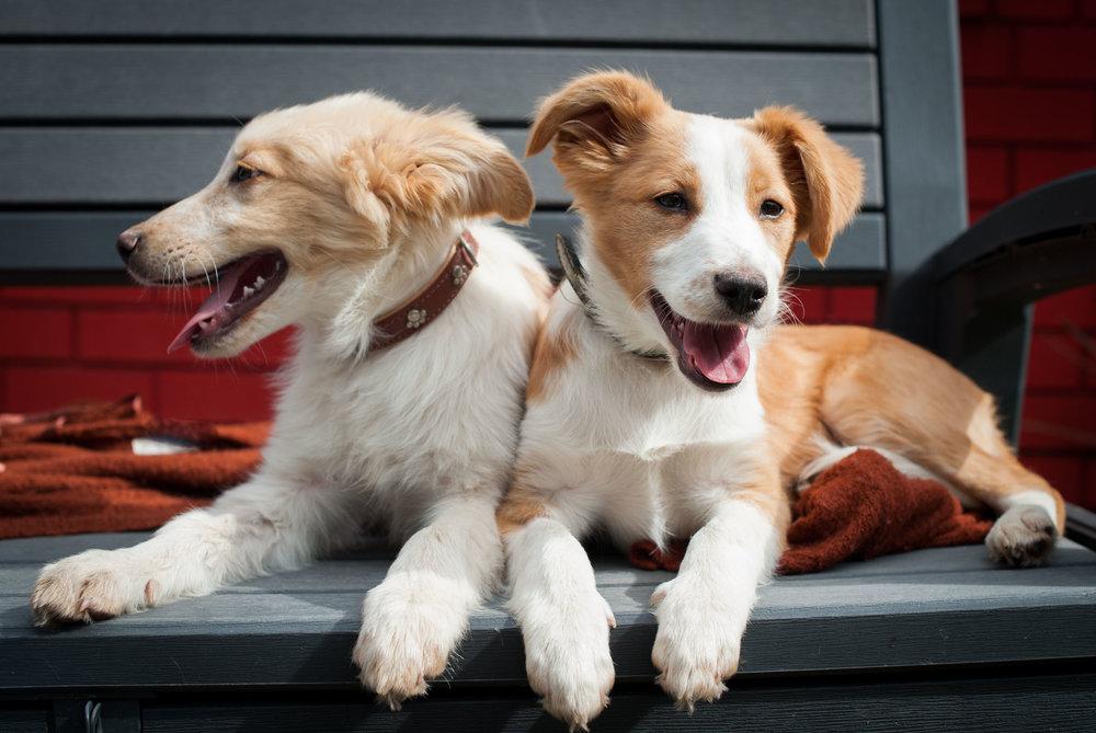 rescue dog photographer gosford