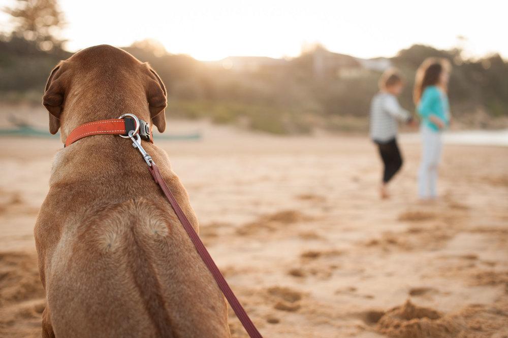 dog beach photographer macmasters beach