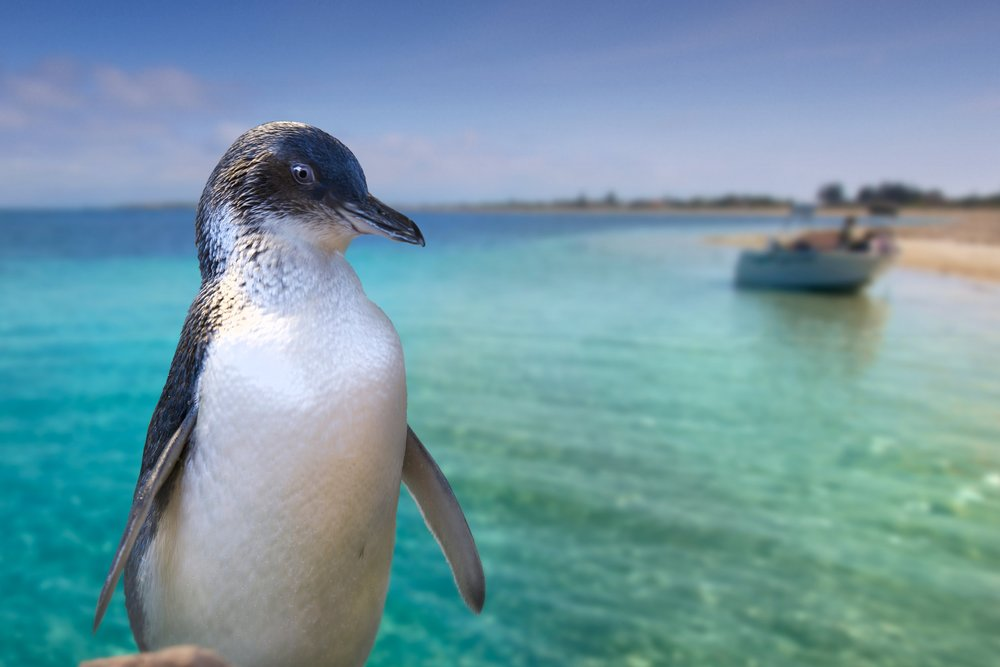 Rockingham-Wild-Encounters-penguin-landscape.jpg
