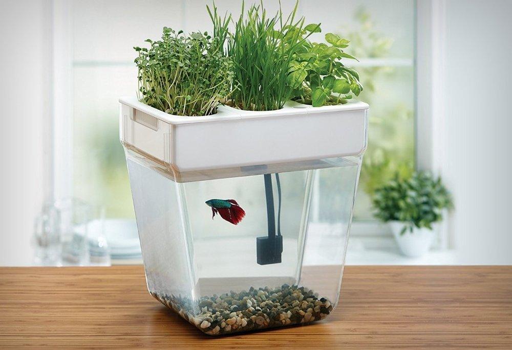 water_garden_fish_tank_1.jpg
