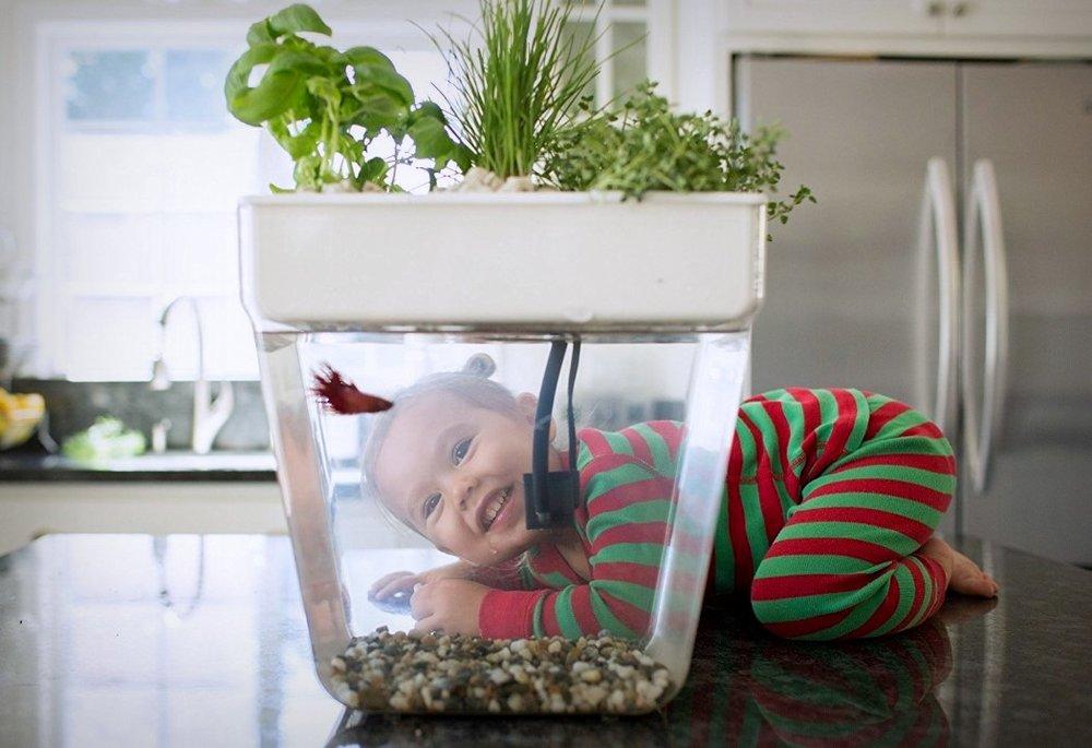 water_garden_fish_tank_4.jpg