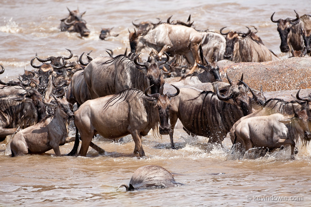 Life and death on the Mara River.