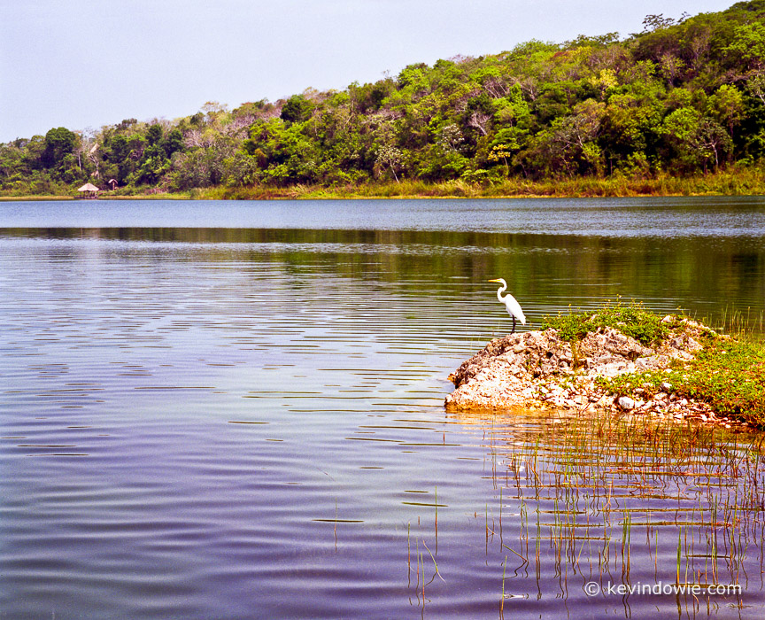 Egret by Lake Peten Itza, Guatemala.