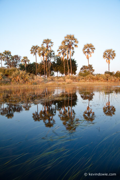 Palm trees and reflections, Okavango Delta, Botswana.