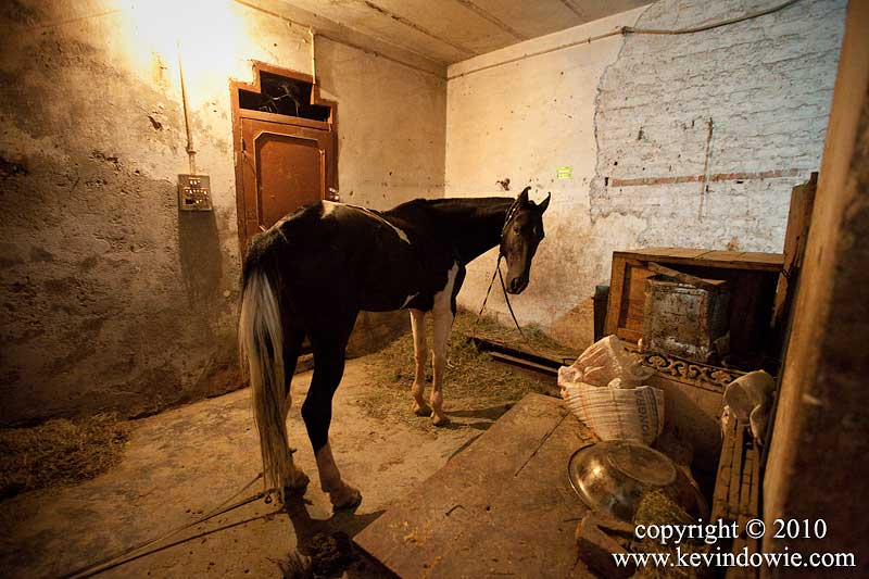 Horse in stable, Old Delhi