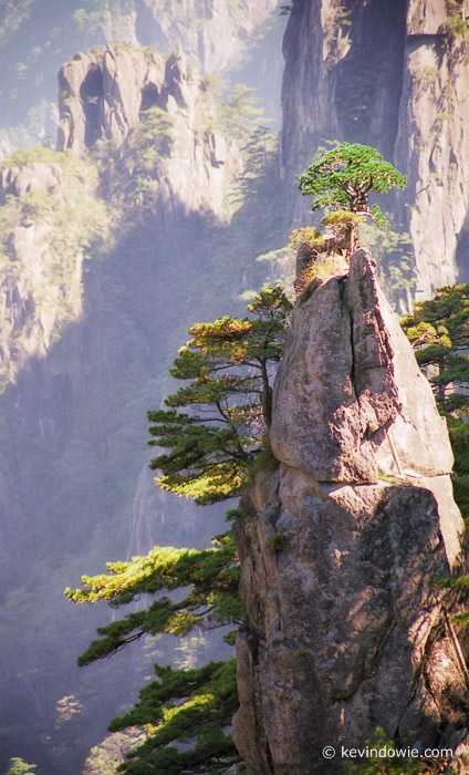 Trees in rock, Huangshan Mountains, China.