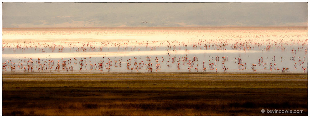 Color Efex Pro version, Flamingoes on lake, Ngorongoro Crater