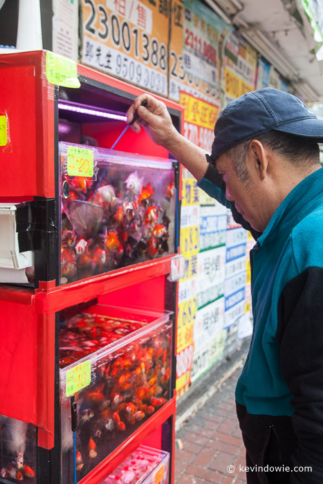 Tending to aquarium fish, Mong Kok