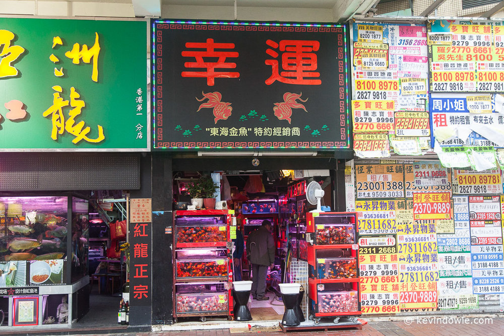 Aquarium fish shopfront with signage, Mong Kok