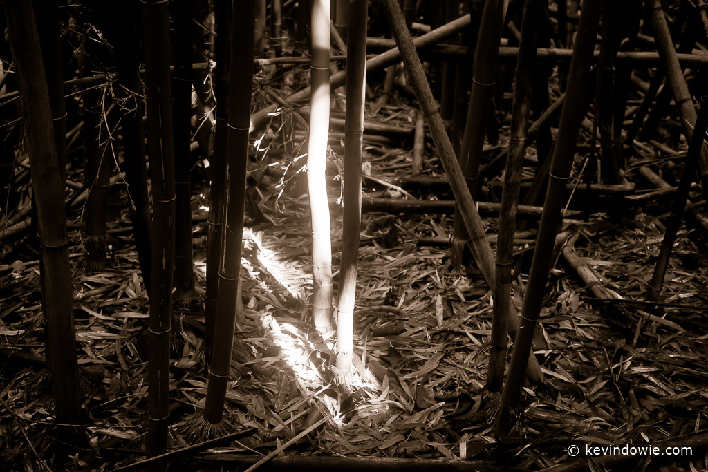 """""""Shaft of light"""" in the bamboo forest, Pipiwai Trail"""