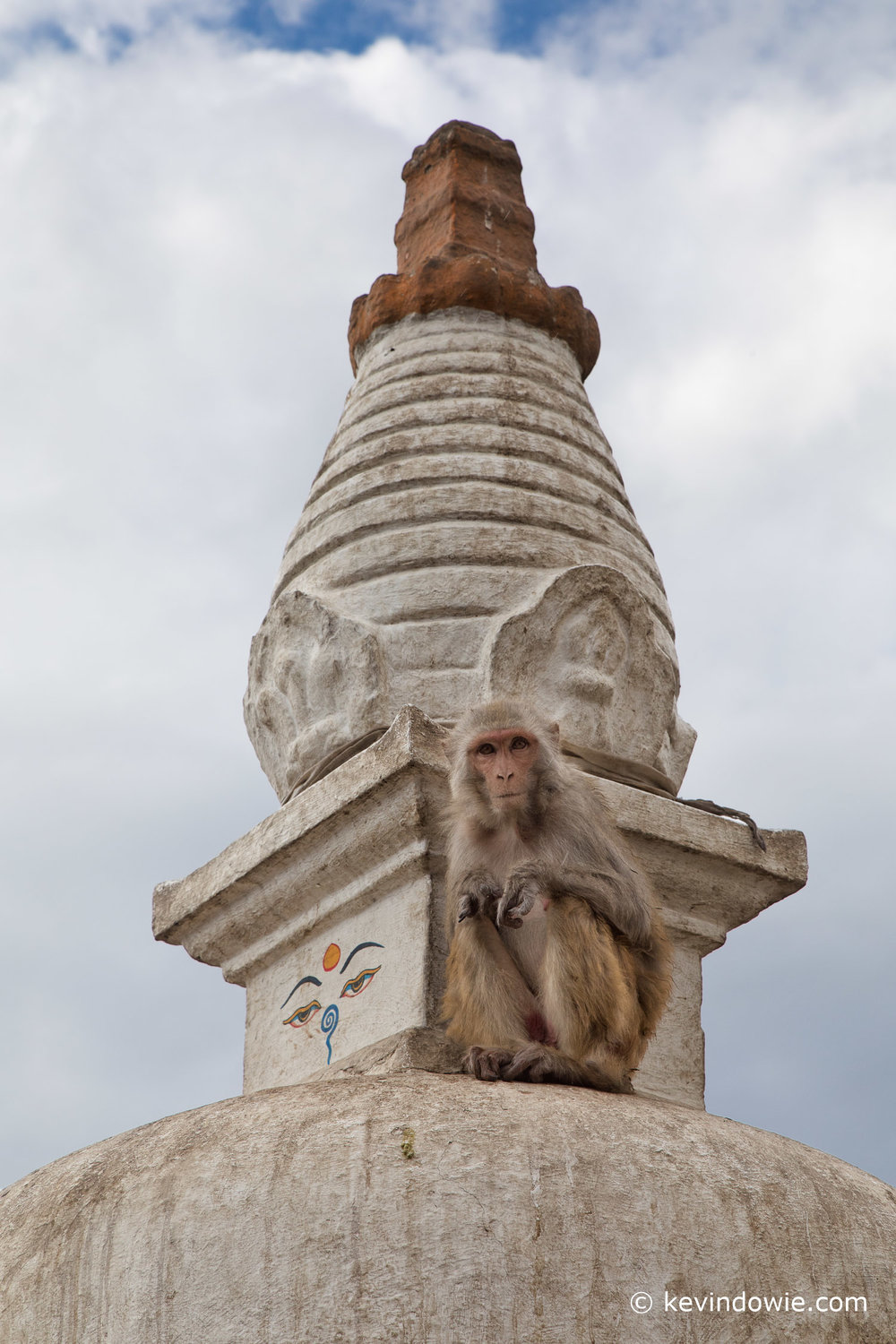 Monkey sitting on chedi,  Swayambhu.