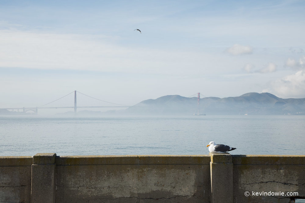 Seagull and the Golden Gate Bridge,  San Francisco.
