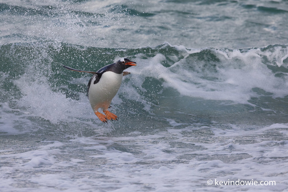 Feet forward for landing, a dramatic exit from the water.