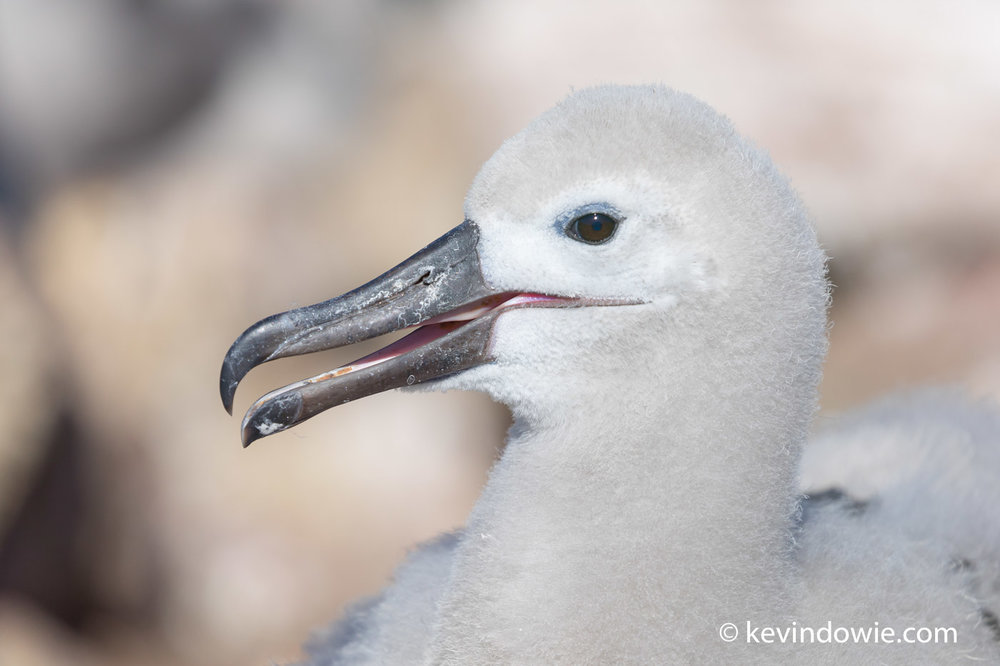 A chick in close up, it's nice to get a good head angle, relatively clean background and a catch light in the eye.
