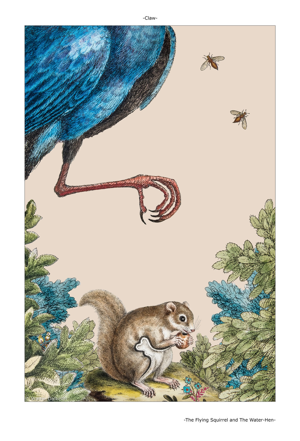 The Flying Squirrel and The Water-Hen Main title.jpg