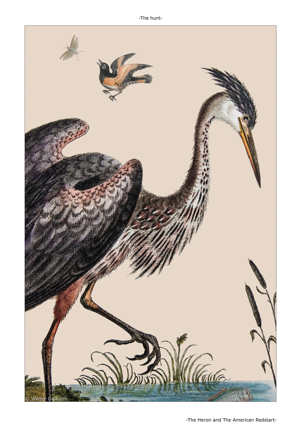 The Heron and The American Redstart Main title.jpg