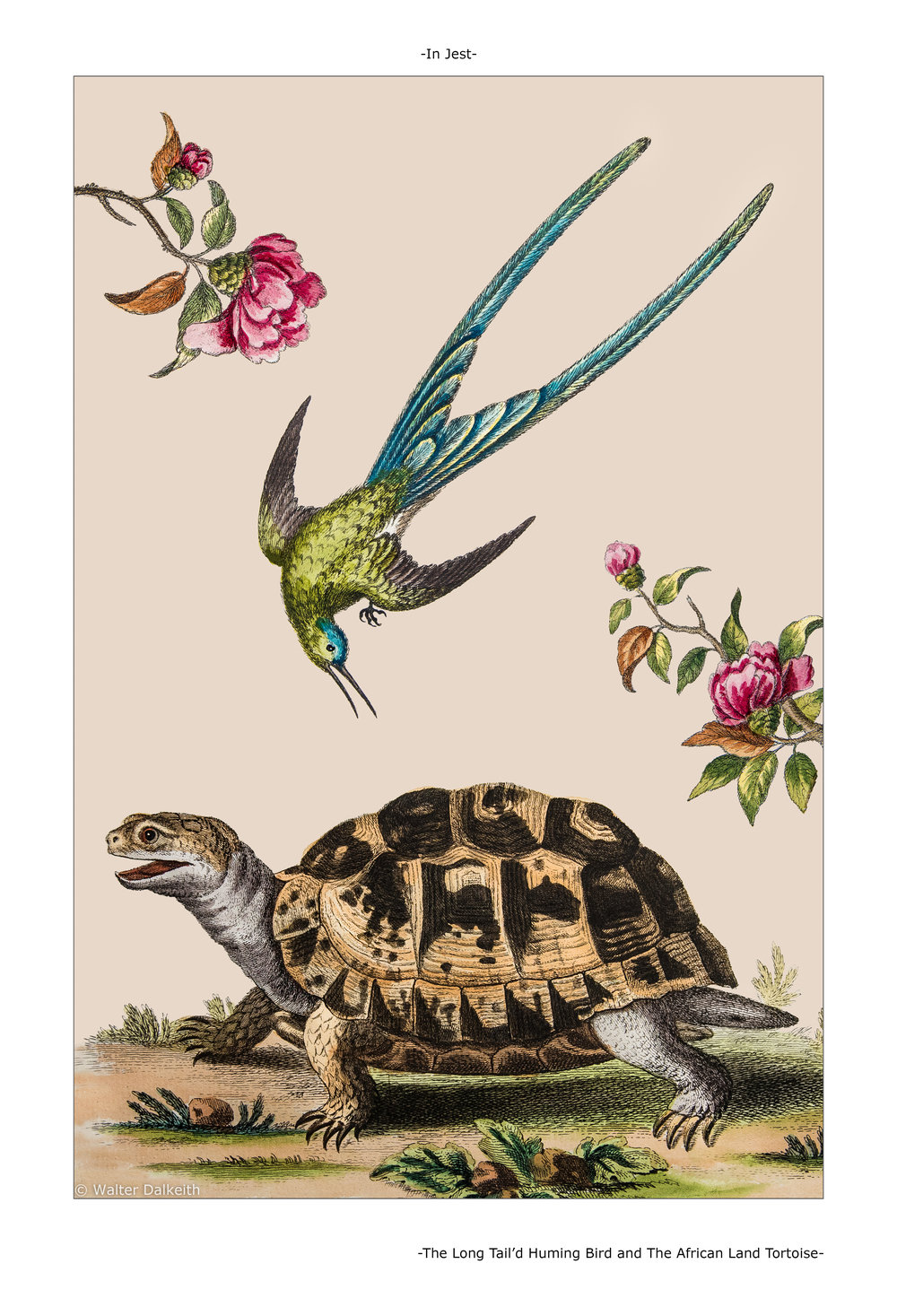 The Long Tail'd Huming Bird and The African Land Tortoise Main title.jpg