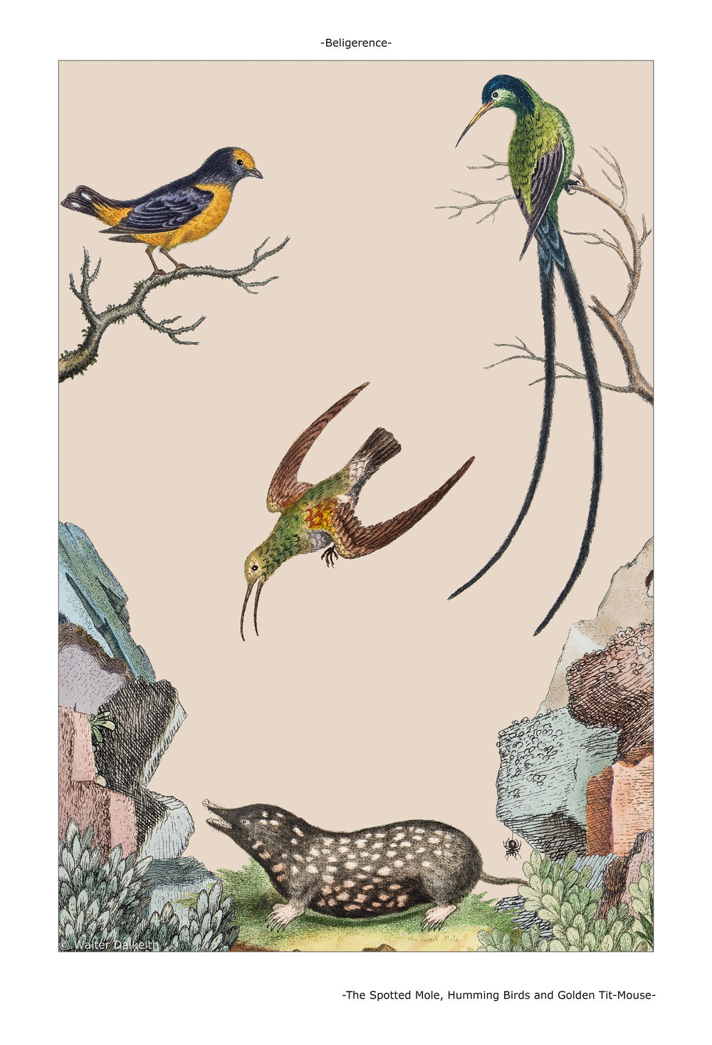 The Spotted Mole, Humming Birds and Golden Tit-Mouse Main title.jpg