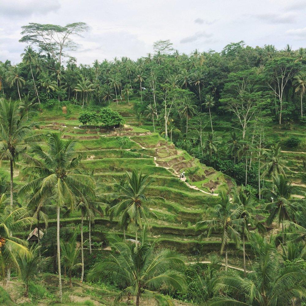 coming soon - Bali
